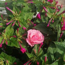 Bougainville Gardens - Jardinagem e Relvados - Lisboa