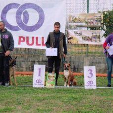 Luís Costa - Treino de Cães - Coimbra