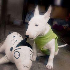 Mrd - Treino de Cães - Aulas Privadas - Mina de Água