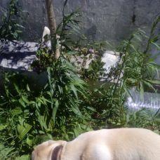 Beatriz - Pet Sitting e Pet Walking - Évora