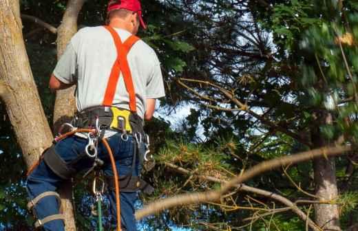 Poda e Manutenção de Árvores - Erva Daninha