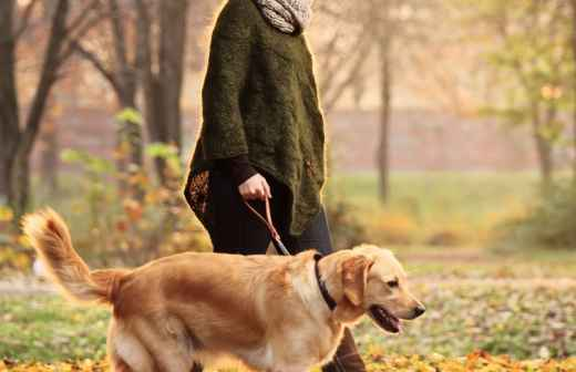 Dog Walking - Broca