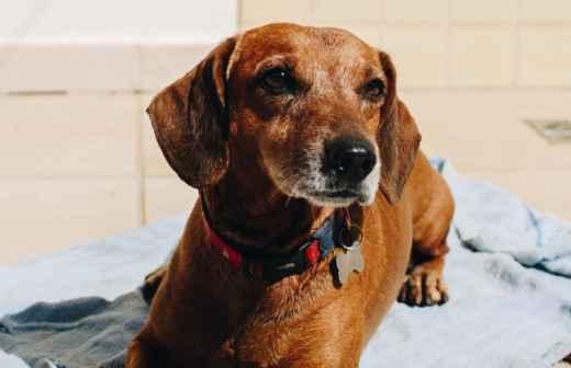 Treino de Cães - Aulas Privadas - Portalegre