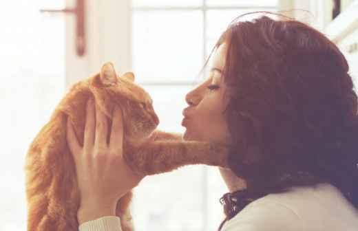 Cat Sitting - Hotel Para Cães