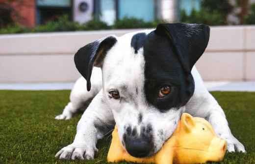 Qual é o preço de serviços para Animais em Amares? Fixando