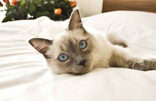 Hotel para Gatos - Para