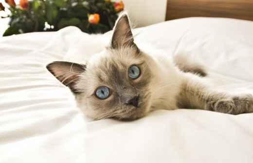 Hotel para Gatos - Creche