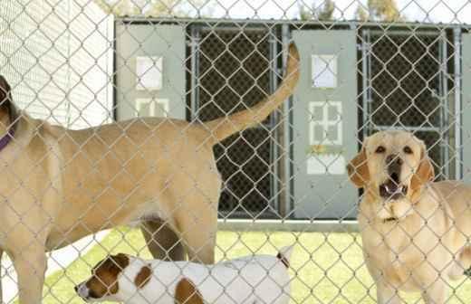 Qual é o preço de serviços para Animais em Vila Nova de Famalicão? Fixando