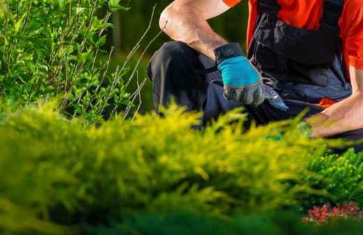 Jardinagem - Cobertura