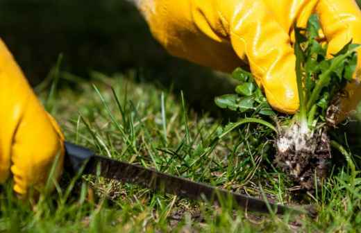 Remoção de Ervas Daninhas - Fertilizante