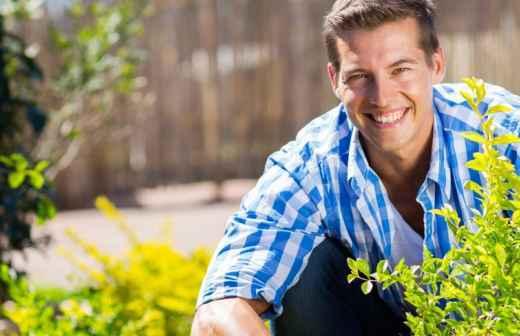 Remoção de Arbustos - Serviços De Jardinagem
