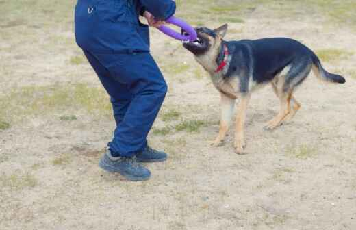 Animal Behavior Modification